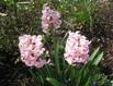Blumen 1 04