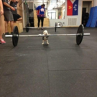 Hund gewichtheben