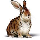 T5d33ea tiger hase